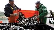 "Armadores: ""A pesca portuguesa tem de estar satisfeita"""