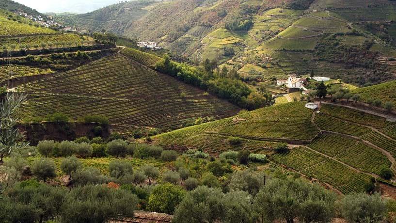 """Vinho ultrapassa """"sol e mar"""" como imagem do turismo português"""