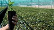 Bloco anuncia acordo com Governo para conter eucalipto