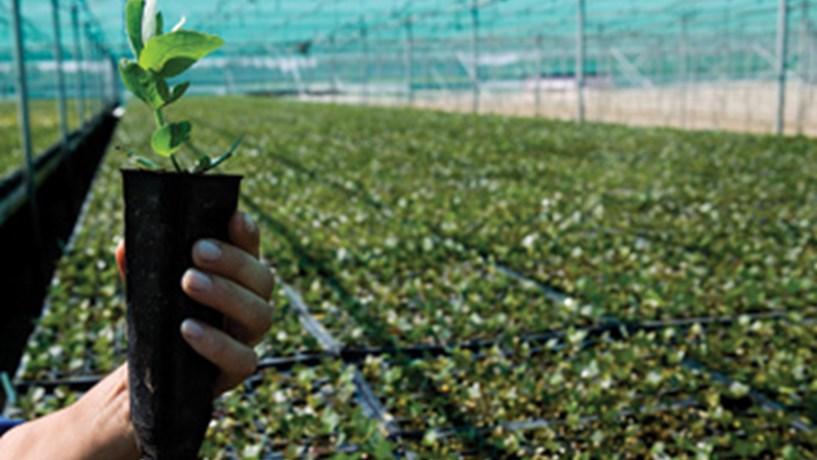BE anuncia acordo com Governo para conter eucalipto e arrendar compulsivamente terras abandonadas