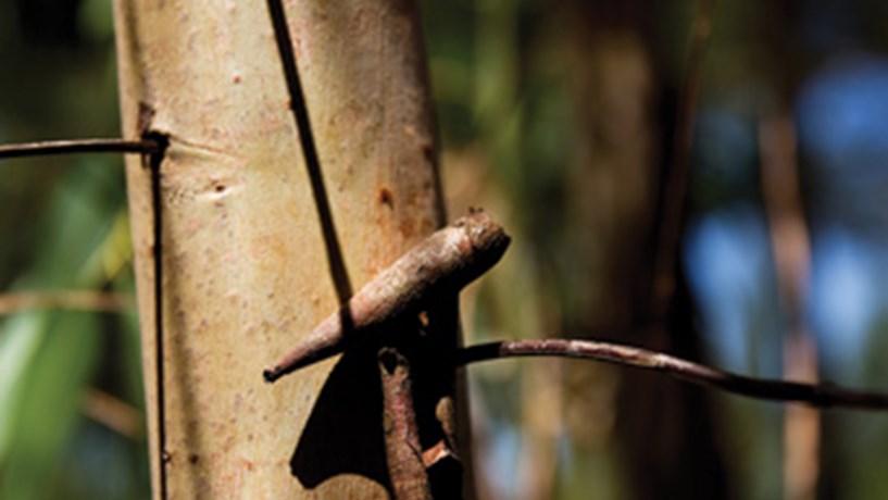 """PCP apresentou 38 medidas a Costa e reiterou desacordo com """"Reforma Florestal"""""""