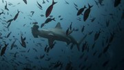 Barómetro da PwC: Desafio do mar está nos fundos