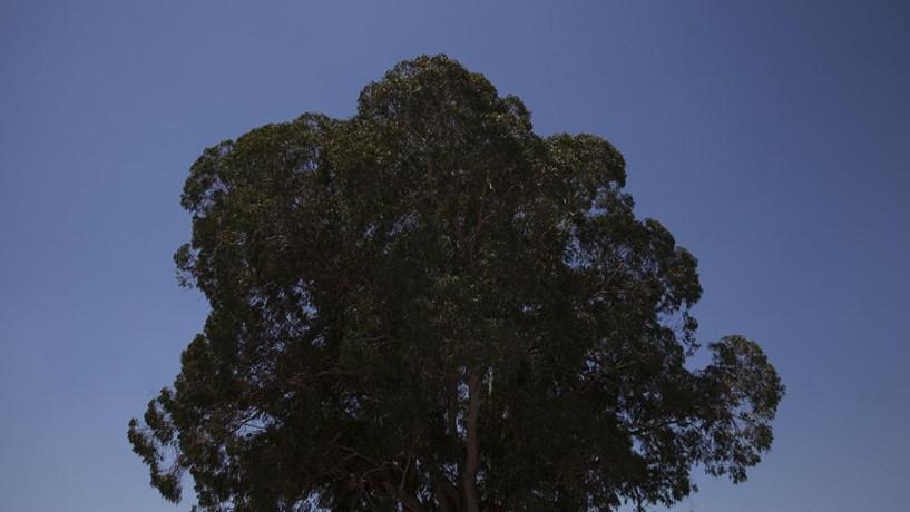 As 12 medidas que o Governo propõe para reformar a floresta