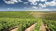 Vitis apoia reconversão da vinha em 35 milhões de euros