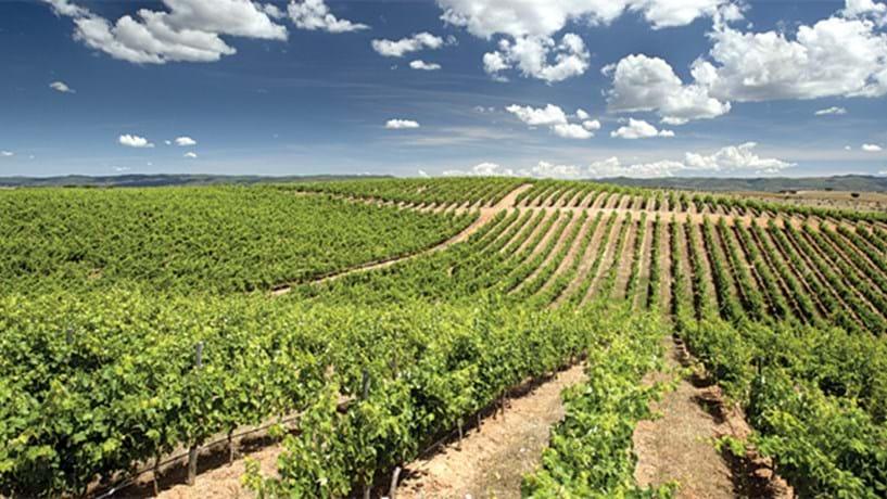 Guia para os apoios à vinha e ao vinho: da cepa ao copo