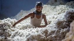 Mundo está prestes a ser inundado de algodão