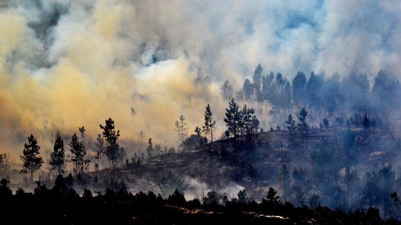 """Investigadores da UTAD defendem aposta em """"árvores bombeiras"""" para travar incêndios"""