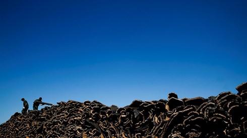 Economia da floresta cresceu 3,8% em 2015