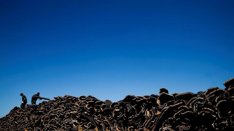 Florestas: Metade da reforma ainda não saiu do papel