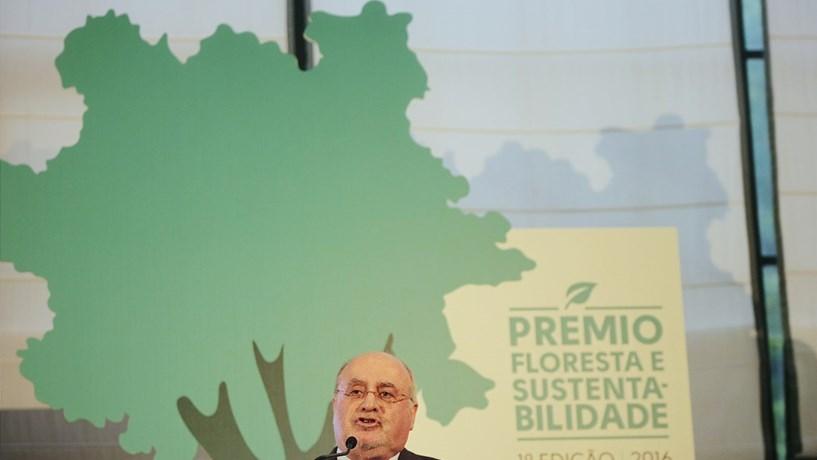 Governo quer recuperar em dez anos 150 mil hectares de floresta perdida