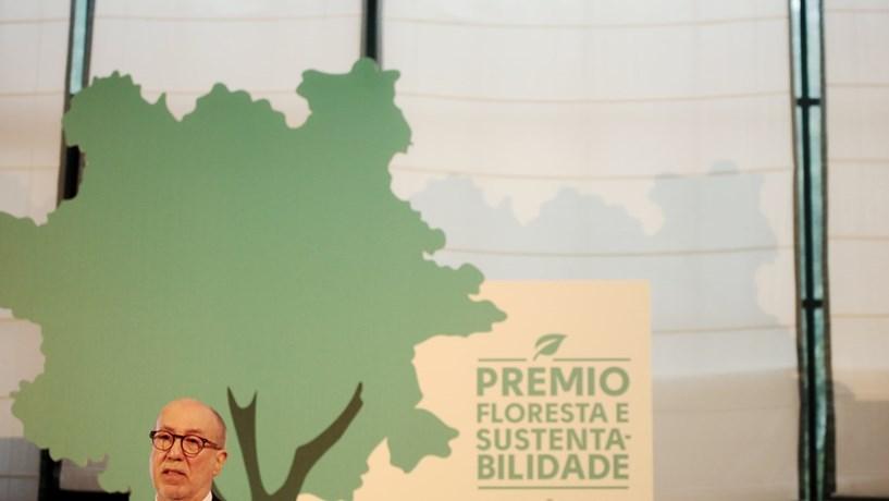Florestas são responsáveis por mais de 9% das exportações nacionais