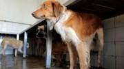 Novo secretário de Estado das Florestas diz serem precisos 50 milhões para canis