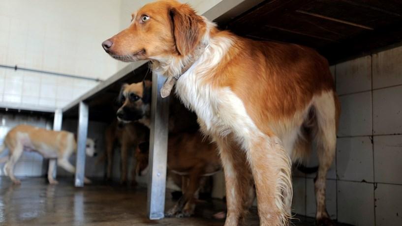 Cães e gatos abandonados vão ser esterilizados em vez de abatidos