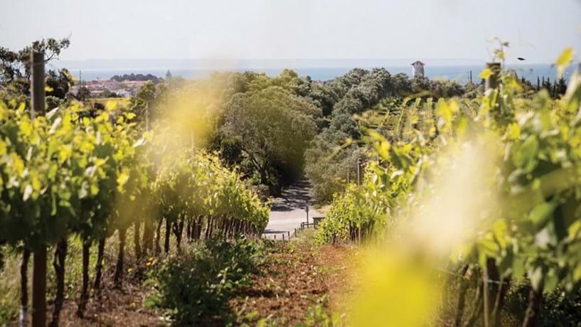 Governo simplifica apoios à promoção de vinhos fora da Europa