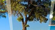 Candidaturas ao Prémio Floresta e Sustentabilidade até 15 de Dezembro