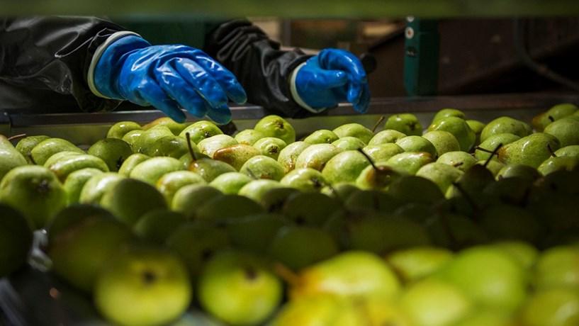 Arábia Saudita e Ucrânia interessadas na fruta produzida em Portugal