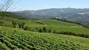 Vinhos verdes aproveitam polémica fiscal para convidar ministra sueca a vindimar