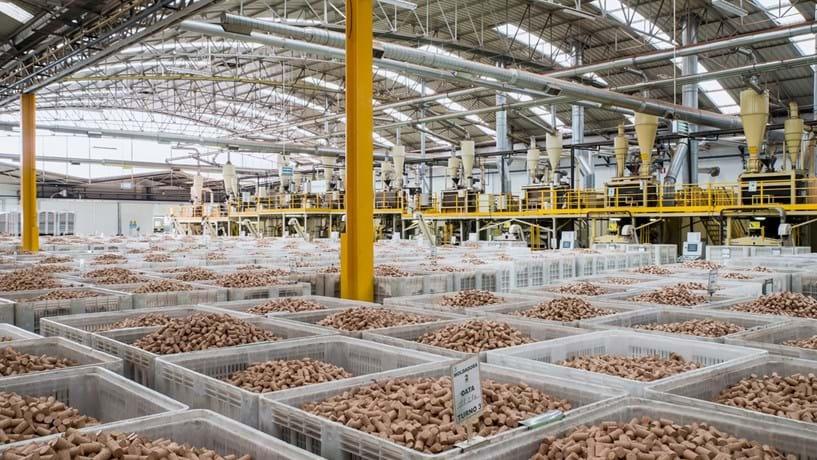 Lucros da Corticeira Amorim sobem 23,7% com aumento das vendas