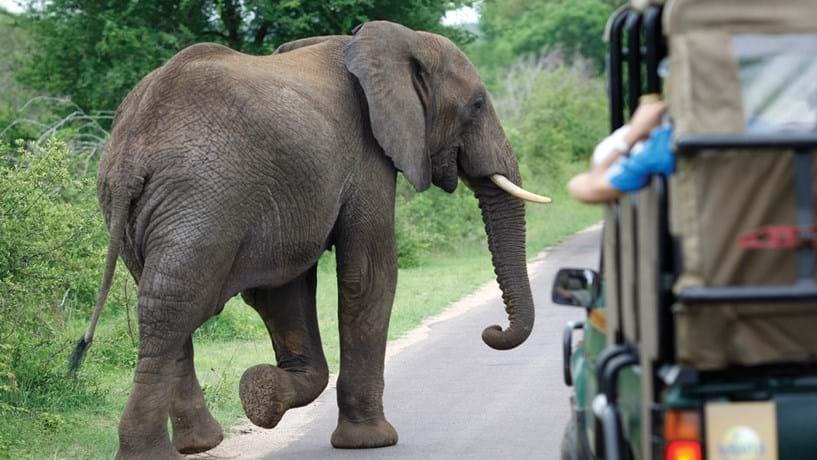 O Kruger Park e os animais no seu esplendor