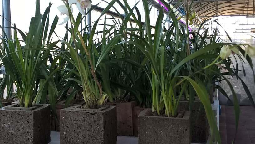 Uma espécie de vaso 100% biodegradável