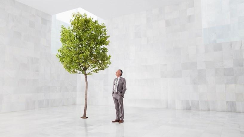 A conveniência da verdade ambiental