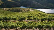 Portugal tem a quarta maior área de vinha da Europa