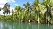 Bohol: Uma obra-prima da natureza