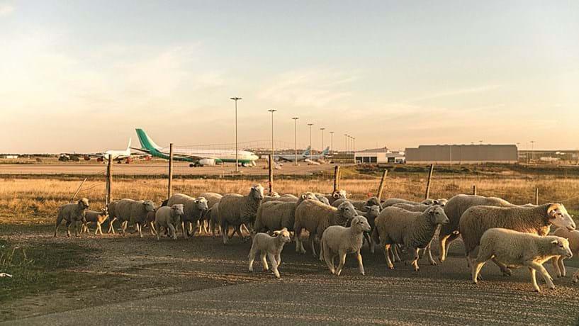 Aeroporto de Beja: Região aguarda investimento que lhe dê outros voos
