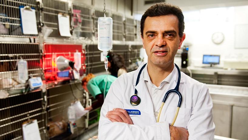 """Luís Montenegro: """"Gestor que só veja números choca com o negócio veterinário"""""""