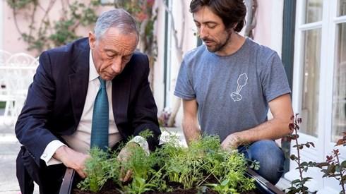 Marcelo já tem uma cama de cultivo no Palácio de Belém