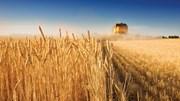 Eficiência e tecnologia sustentam produção de cereais