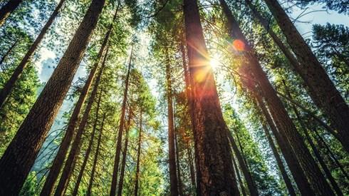 Principais novidades na reforma da floresta