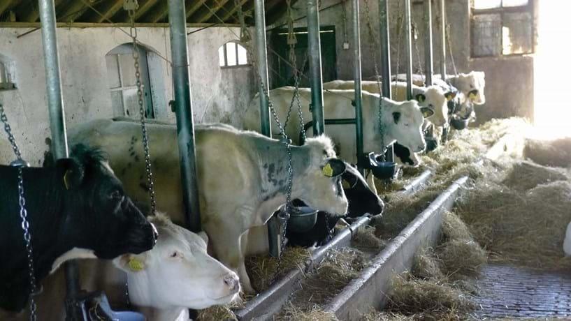 Procura-se sangue novo na agro-pecuária