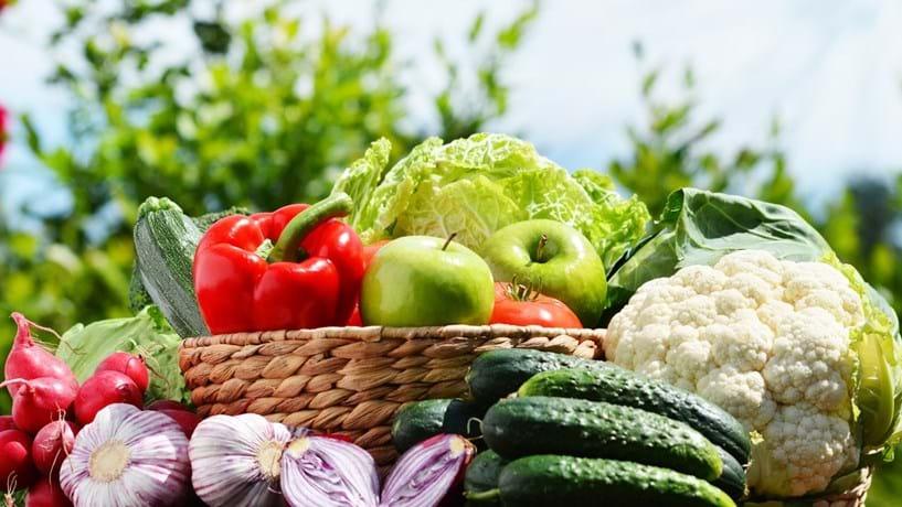COTHN motiva desenvolvimento no sector hortofrutícola