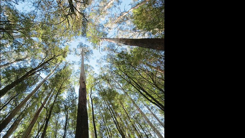 A Reforma da Floresta