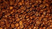 Cientistas lutam para salvar humanidade de um mundo sem café