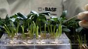 BASF: energia e protecção climática