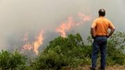 Grandes incêndios destroem 75% da floresta