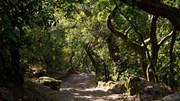 PCP chumba banco de terras. Reforma das florestas fica a meio caminho