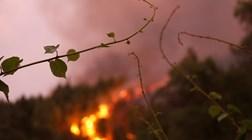 PGR divulga lista oficial de mortos do incêndio de Pedrógão Grande