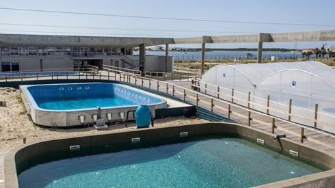 Marcelo inaugura maior centro europeu de reabilitação marinha aberto há um ano