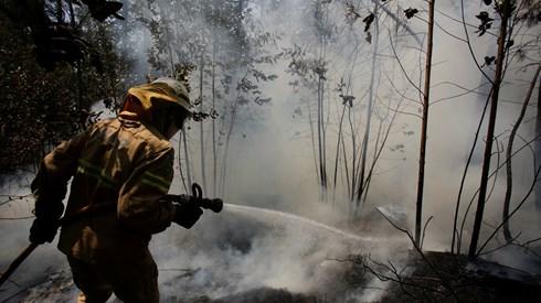 Incêndios: Apenas 1% da área das papeleiras ardeu numa década