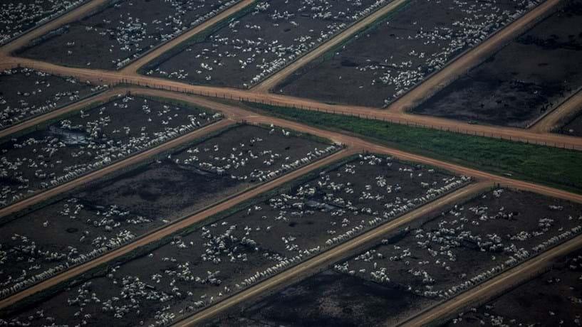 O fundo de Dantas tem mais terras - aproximadamente 500.000 hectares – do que qualquer outra empresa no Brasil