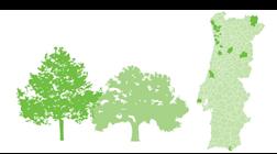 Mapa: O que fazem as câmaras para garantir a limpeza da floresta?