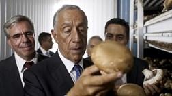 """Novo Banco continua às voltas com o """"rei"""" dos cogumelos"""