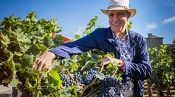 Portugueses metem vinhos de Berardo no pódio