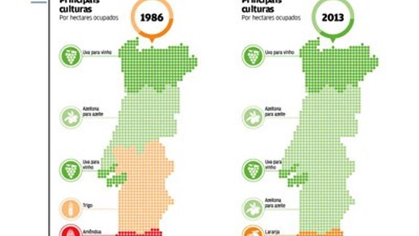 mapa agricola de portugal Infografia: Os números da agricultura em Portugal   Observatório  mapa agricola de portugal