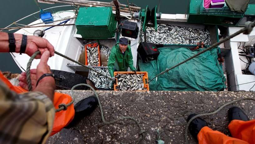 Governo determina regimes de apoio à proibição temporária de pesca da sardinha