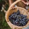 6 vinhos para ajudar a lavar os cestos thumbnail
